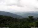 Cameron_Highlands_1.jpg