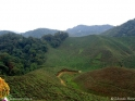 Cameron_Highlands_tea_fields.jpg